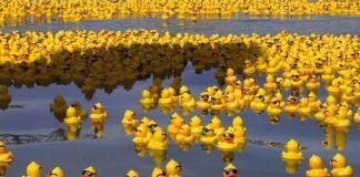 Kaza Sonucu Denize Dökülen Oyuncak Ördeklerin Tesadüfen Bilime Hizmetinin Tuhaf Hikayesi