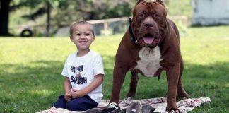 Dünyanın En Büyük Pitbull'u Ve 8 Adet Çok Tatlı Yavrusu